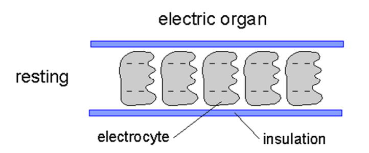 JamesA-Xenobiology-Silence-diagram1