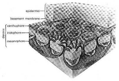jamesa-xenobiology-the zygons-illustration2